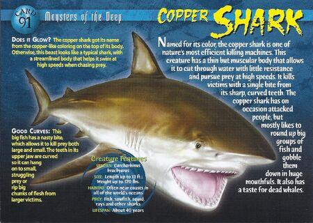 Copper Shark front