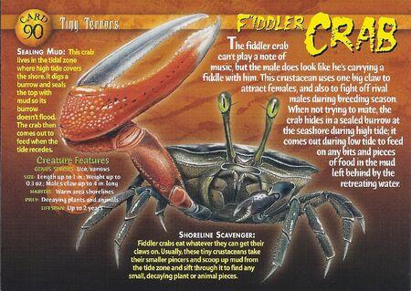 Fiddler Crab front