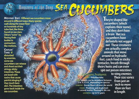 Sea Cucumbers front