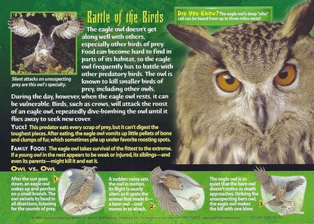 Eagle Owl back