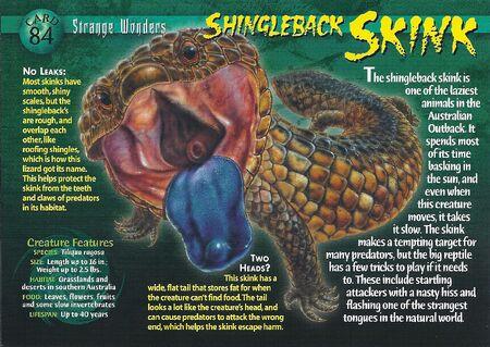 Shingleback Skink front