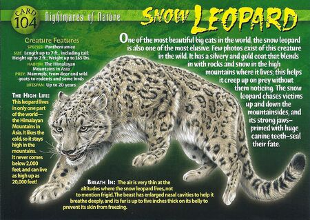 Snow Leopard front