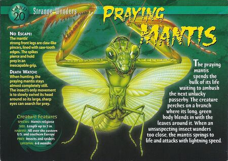 Praying Mantis front