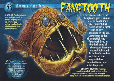 Fangtooth front