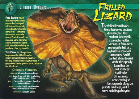 Frilled Lizard front