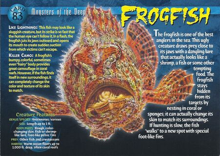 Frogfish front