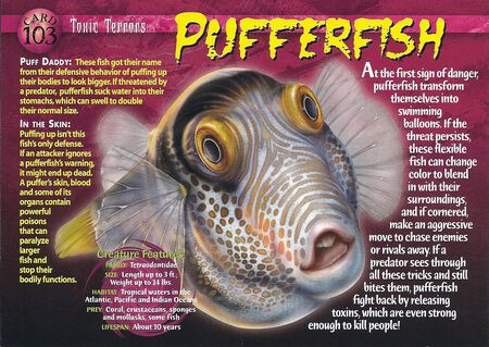 Pufferfish front