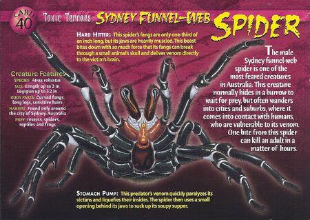 Sydney Funnel-Web Spider front