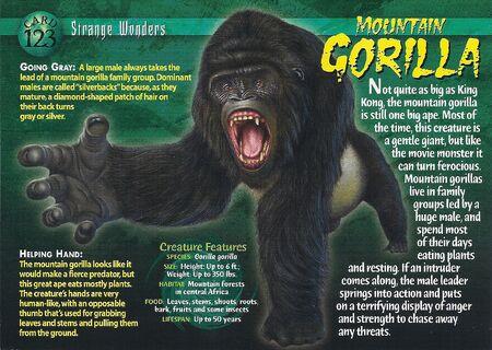 Mountain Gorilla front