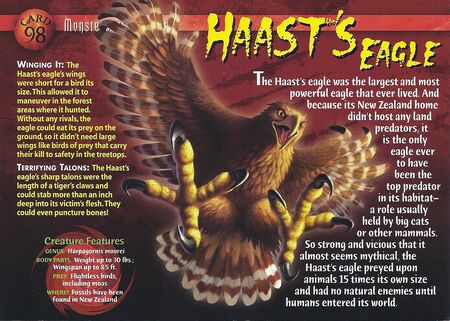 Haast's Eagle front