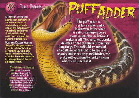 Puff Adder front