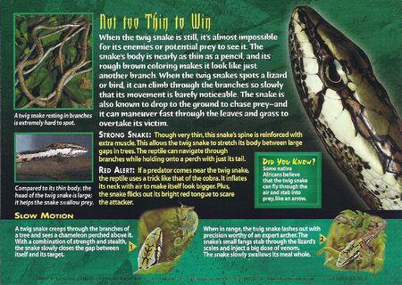Twig Snake back