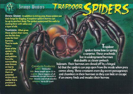 Trapdoor Spider front