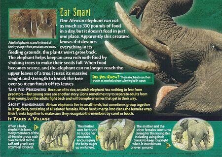 African Elephant back