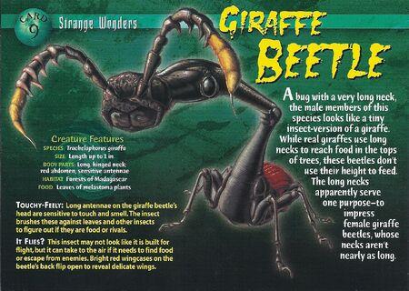 Giraffe Beetle front
