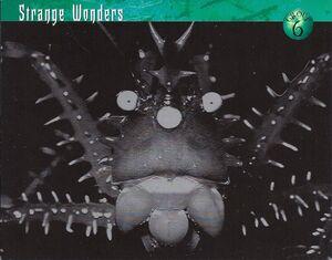 Strange Wonders 0