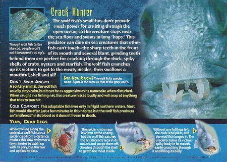 Wolf Fish back
