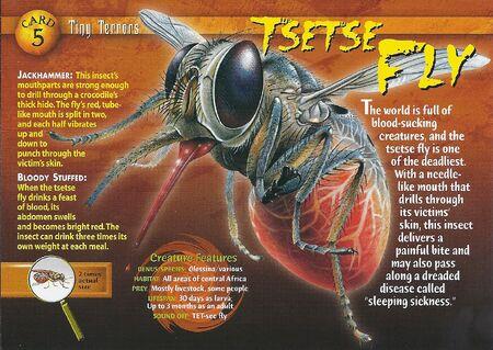 Tsetse Fly front