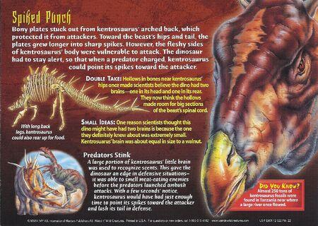 Kentrosausus back