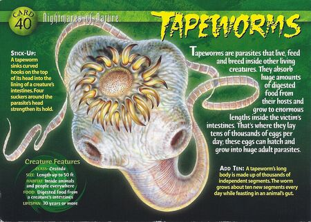 Tapeworm front