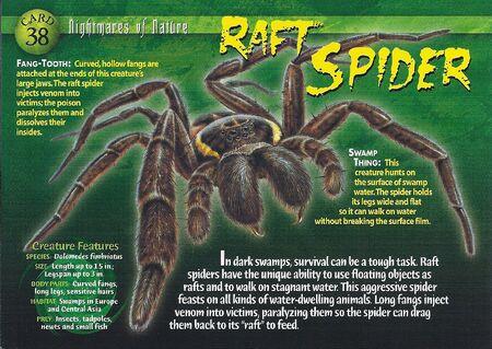 Raft Spider front