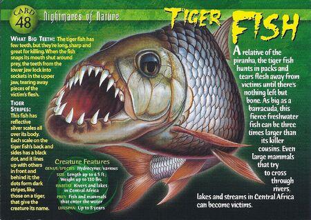 Tiger Fish front