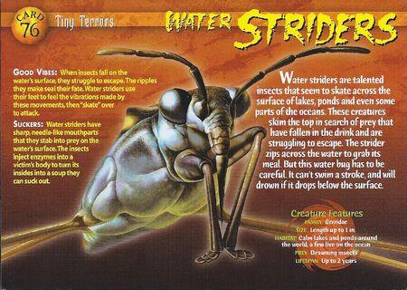 Water Strider front