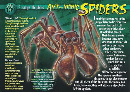 Ant-Mimic Spiders front