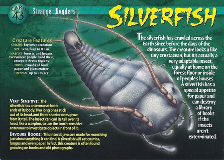Silverfish front