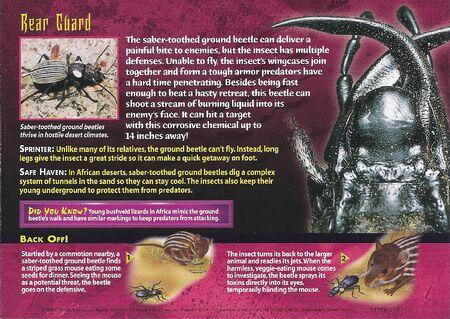 Saber-Toothed Ground Beetle back