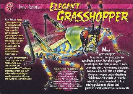 Elegant Grasshopper front