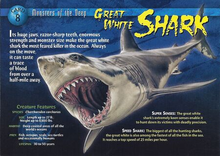Great White Shark front