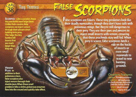 False Scorpions front