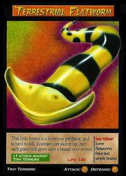 Terrestrial Flatworm