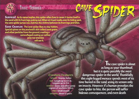 Cave Spider front