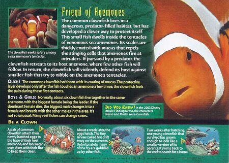 Clownfish back