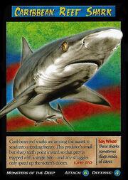 Carribean Reef Shark