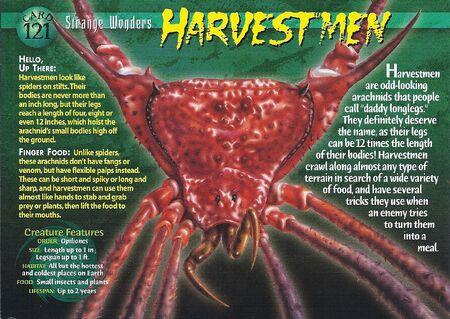 Harvestmen front
