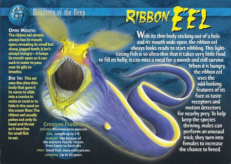 Ribbon Eel front