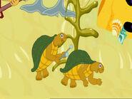 TortoisePlayingTimpani