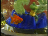 Goldfish(Pet)