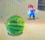 SMG Watermelons