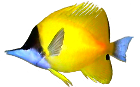 File:Forceps Fish AD.png