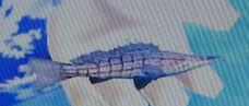 LongnoseHawkfish
