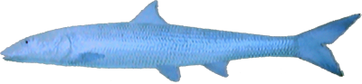 File:Bonefish.png