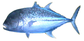File:Trevally AD.png