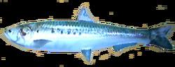 Sardine AD