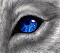 File:My eye o.o.jpg