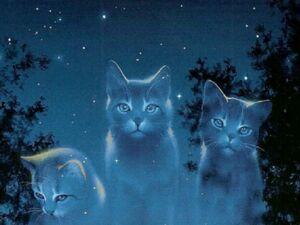 Starclan-cats-warriors-novel-series-31827216-1024-768