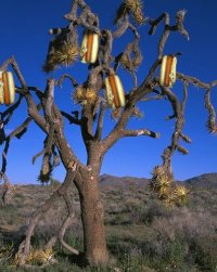 File:Hotdog tree.jpg